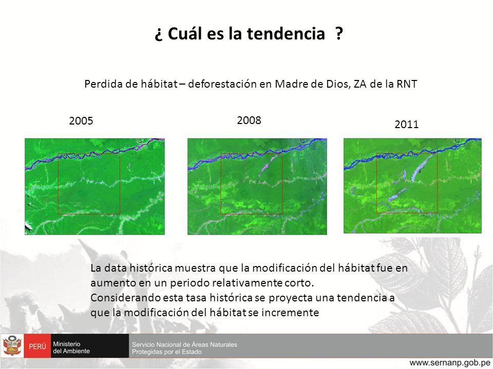 ¿ Cuál es la tendencia ? Perdida de hábitat – deforestación en Madre de Dios, ZA de la RNT 2005 2008 2011 La data histórica muestra que la modificació