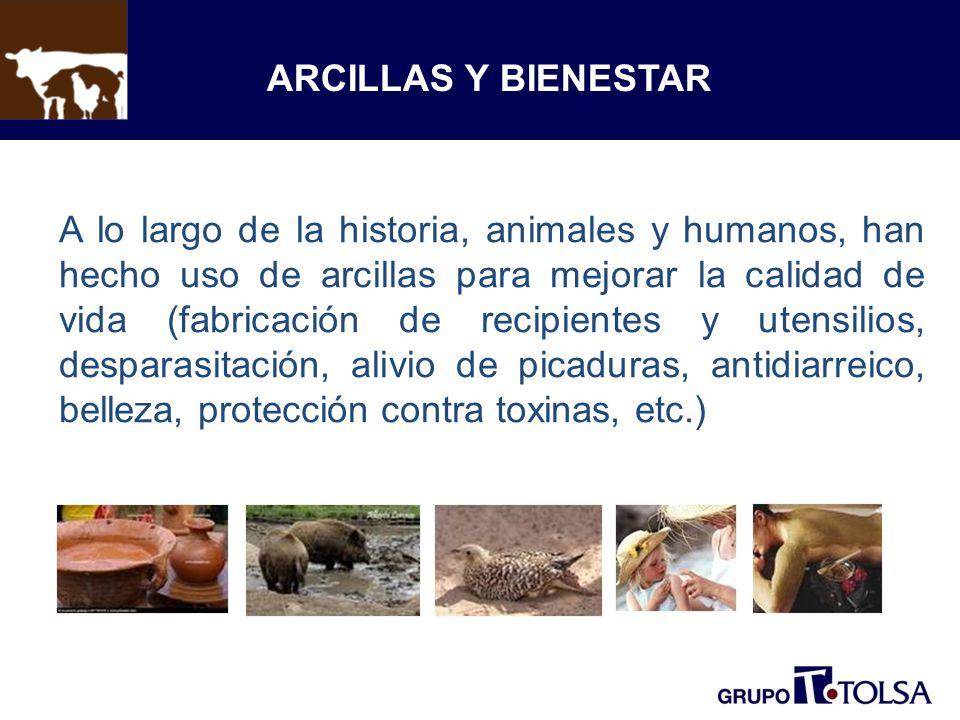 ARCILLAS Y BIENESTAR A lo largo de la historia, animales y humanos, han hecho uso de arcillas para mejorar la calidad de vida (fabricación de recipien