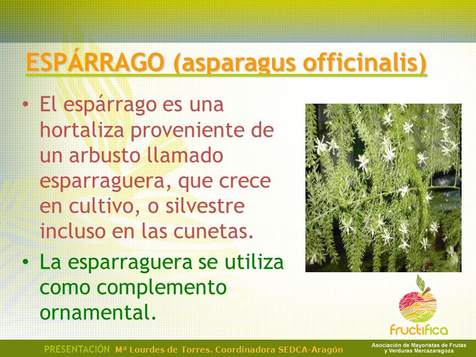 El espárrago es una hortaliza proveniente de un arbusto llamado esparraguera, que crece en cultivo, o silvestre incluso en las cunetas. La esparraguer