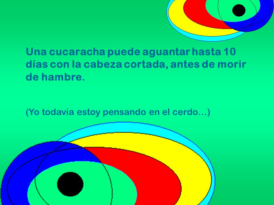 Una cucaracha puede aguantar hasta 10 días con la cabeza cortada, antes de morir de hambre.