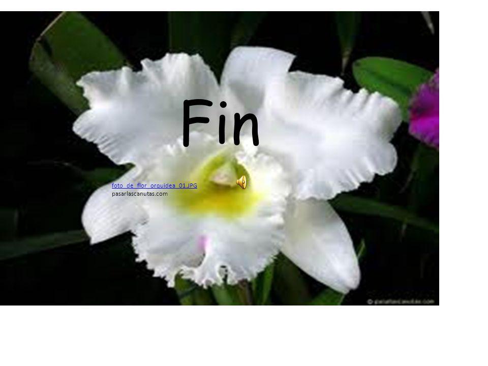 Fin foto_de_flor_orquidea_01.JPG pasarlascanutas.com