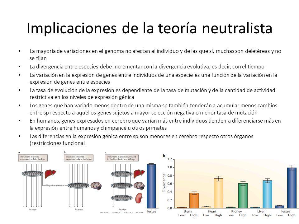 Implicaciones de la teoría neutralista La mayoría de variaciones en el genoma no afectan al individuo y de las que sí, muchas son deletéreas y no se f