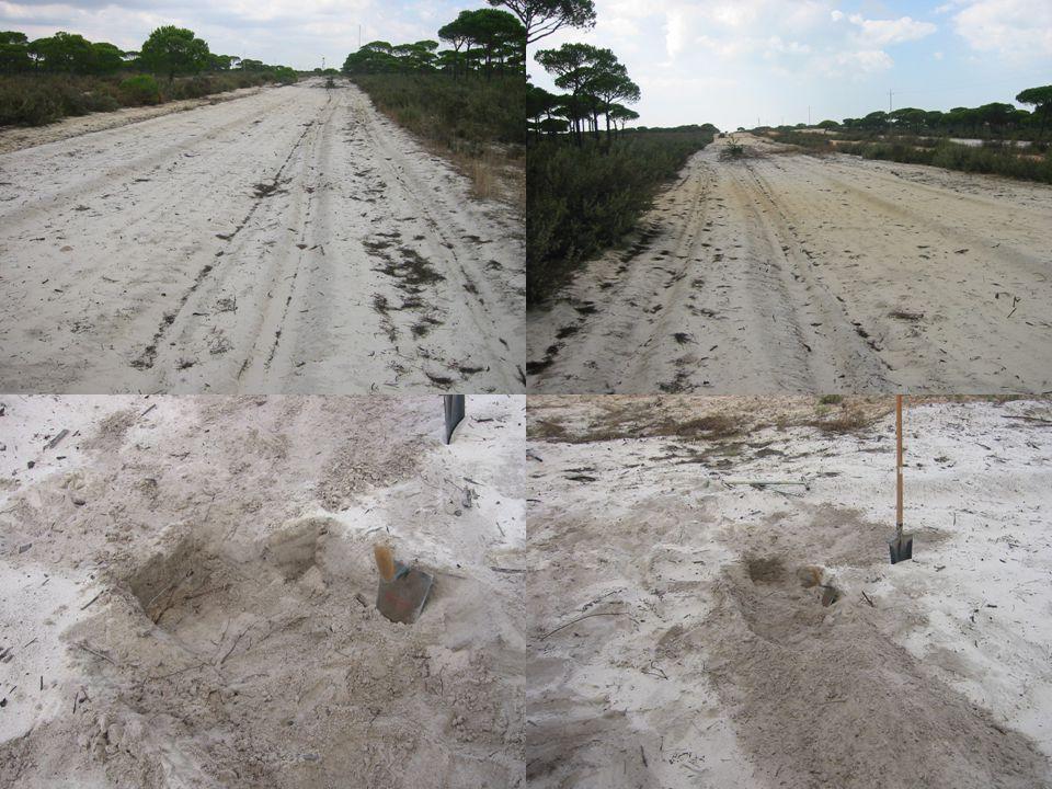 Caracteristicas del punto de observación arenas z cf zczc material más fino (eluviado) superficie del suelo (desnudo) pepep capa freática colgada