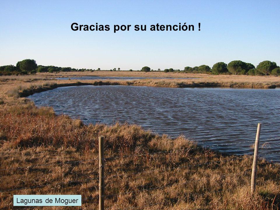Doñana, Marzo 2001 Gracias por su atención !