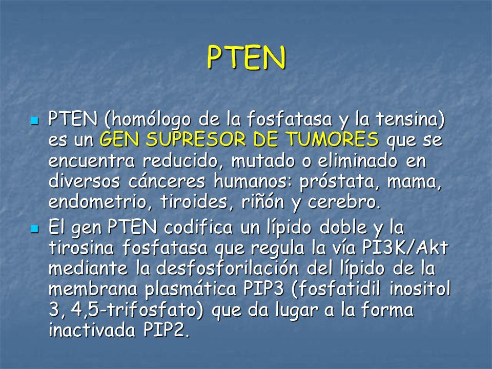 PIP2 PTEN Activación de PI3K y Ras/MEK/Erk en cáncer de mama TN
