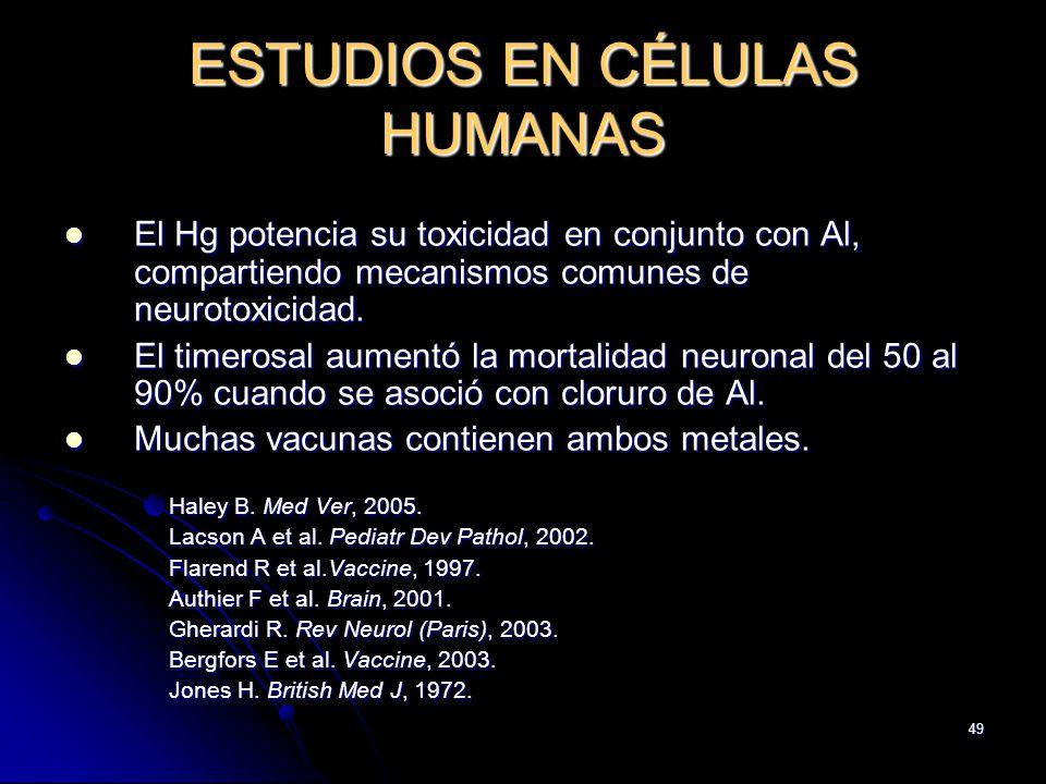49 ESTUDIOS EN CÉLULAS HUMANAS El Hg potencia su toxicidad en conjunto con Al, compartiendo mecanismos comunes de neurotoxicidad. El Hg potencia su to