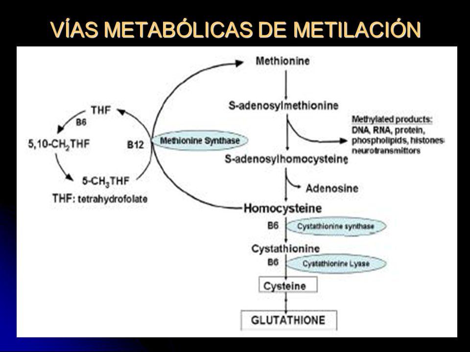 52 VÍAS METABÓLICAS DE METILACIÓN