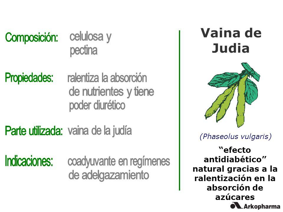 Vaina de Judia (Phaseolus vulgaris) efecto antidiabético natural gracias a la ralentización en la absorción de azúcares
