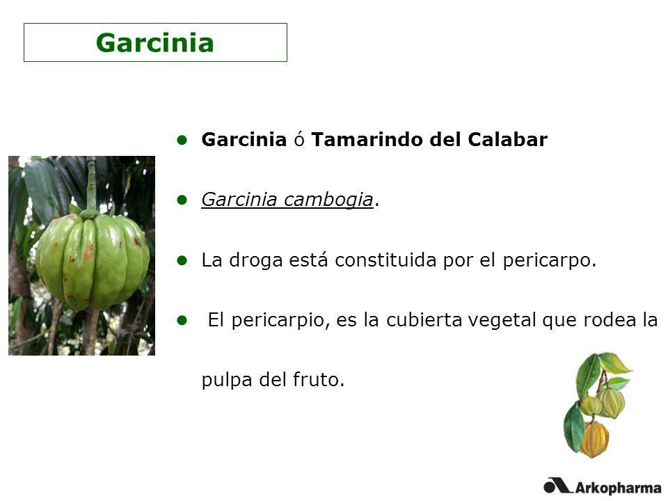 Garcinia ó Tamarindo del Calabar Garcinia cambogia. La droga está constituida por el pericarpo. El pericarpio, es la cubierta vegetal que rodea la pul