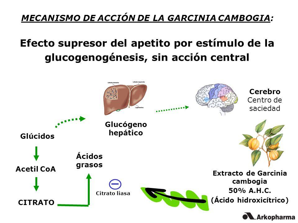 MECANISMO DE ACCIÓN DE LA GARCINIA CAMBOGIA: Efecto supresor del apetito por estímulo de la glucogenogénesis, sin acción central Glúcidos Acetil CoA Ácidos grasos CITRATO Extracto de Garcinia cambogia 50% A.H.C.