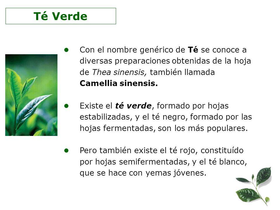Con el nombre genérico de Té se conoce a diversas preparaciones obtenidas de la hoja de Thea sinensis, también llamada Camellia sinensis. Existe el té