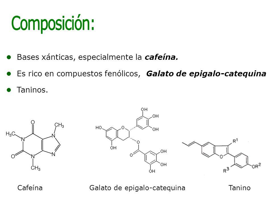 Bases xánticas, especialmente la cafeína. Es rico en compuestos fenólicos, Galato de epigalo-catequina Taninos. TaninoCafeínaGalato de epigalo-catequi