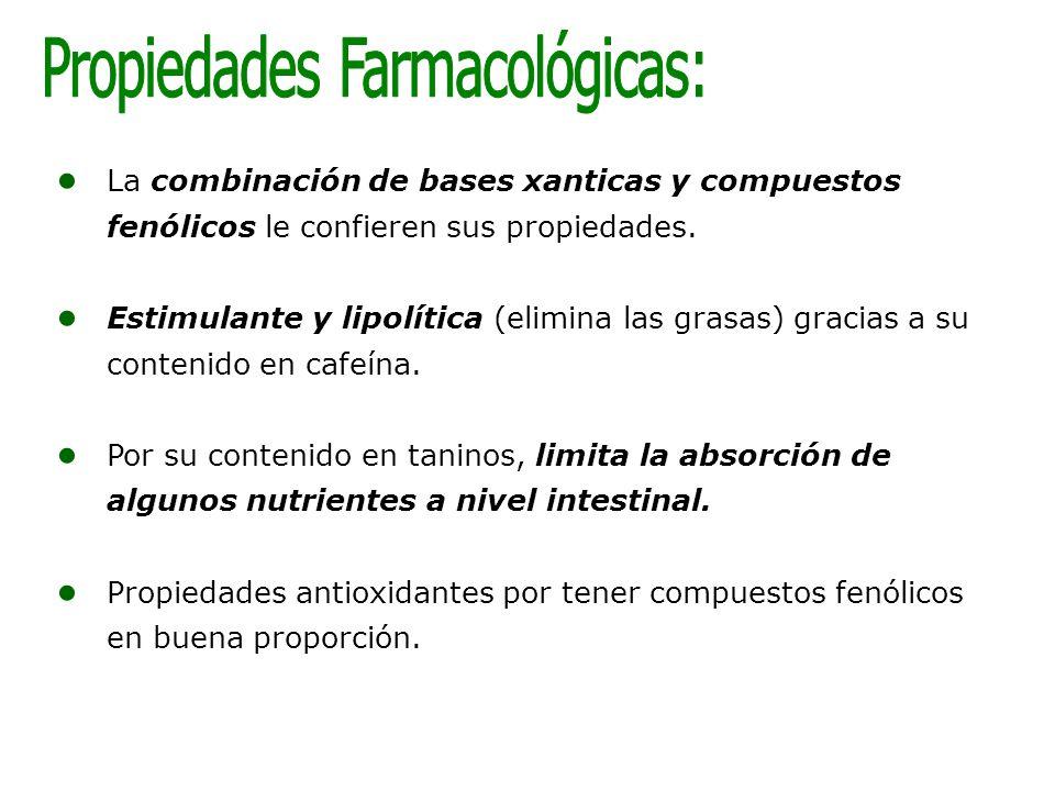 La combinación de bases xanticas y compuestos fenólicos le confieren sus propiedades. Estimulante y lipolítica (elimina las grasas) gracias a su conte