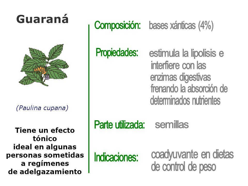 Guaraná (Paulina cupana) Tiene un efecto tónico ideal en algunas personas sometidas a regímenes de adelgazamiento