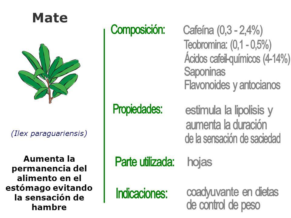 Mate (Ilex paraguariensis) Aumenta la permanencia del alimento en el estómago evitando la sensación de hambre