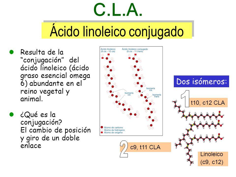 Resulta de la conjugación del ácido linoleico (ácido graso esencial omega 6) abundante en el reino vegetal y animal.