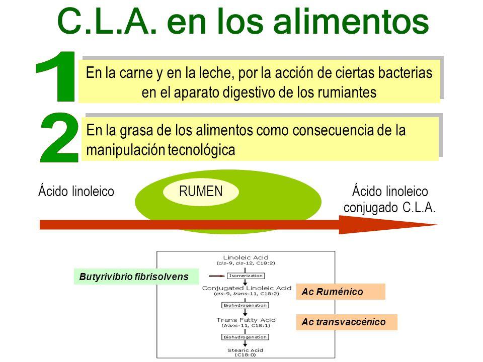 RUMEN En la carne y en la leche, por la acción de ciertas bacterias en el aparato digestivo de los rumiantes Ácido linoleicoÁcido linoleico conjugado C.L.A.