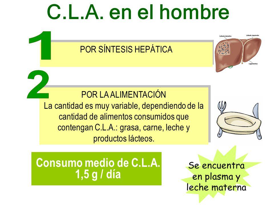POR SÍNTESIS HEPÁTICA POR LA ALIMENTACIÓN La cantidad es muy variable, dependiendo de la cantidad de alimentos consumidos que contengan C.L.A.: grasa, carne, leche y productos lácteos.