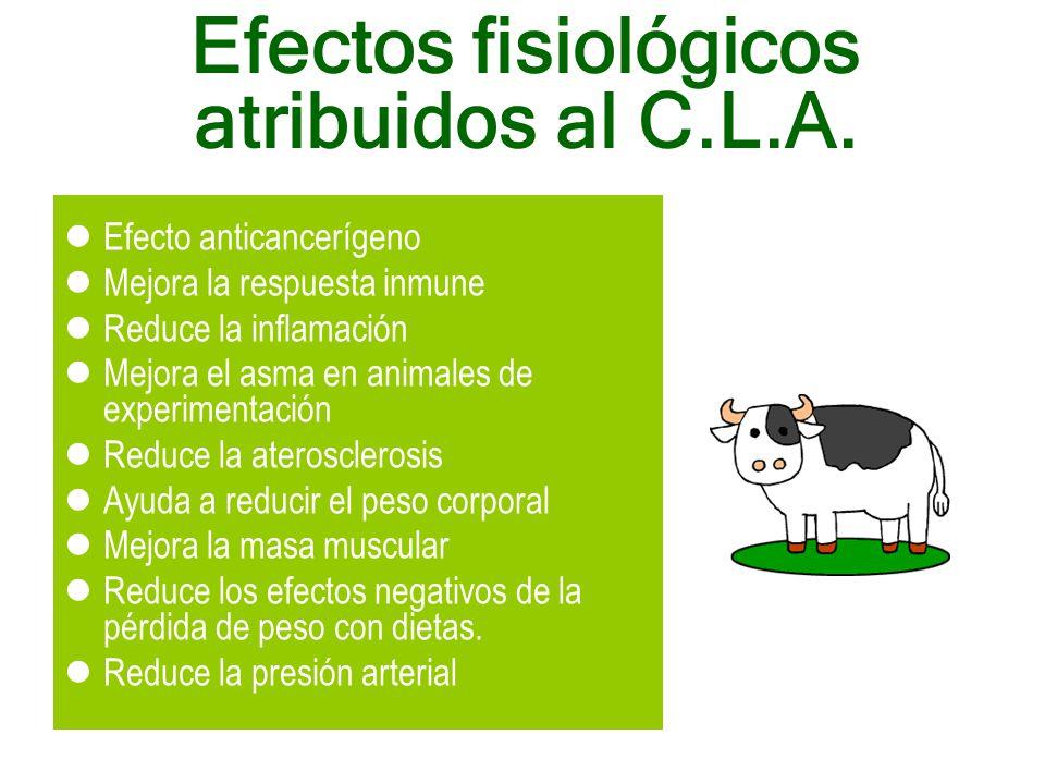 Efecto anticancerígeno Mejora la respuesta inmune Reduce la inflamación Mejora el asma en animales de experimentación Reduce la aterosclerosis Ayuda a reducir el peso corporal Mejora la masa muscular Reduce los efectos negativos de la pérdida de peso con dietas.