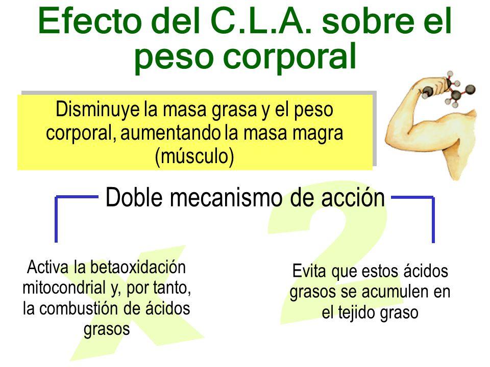 Activa la betaoxidación mitocondrial y, por tanto, la combustión de ácidos grasos Evita que estos ácidos grasos se acumulen en el tejido graso Efecto del C.L.A.