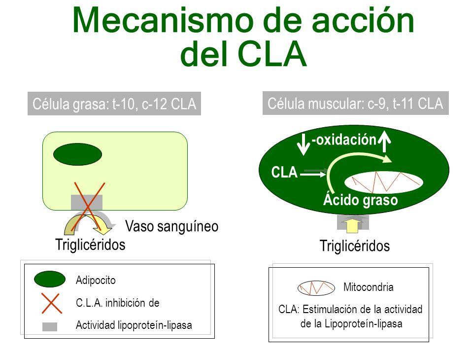 Mecanismo de acción del CLA Triglicéridos Vaso sanguíneo Adipocito Actividad lipoproteín-lipasa C.L.A. inhibición de Célula grasa: t-10, c-12 CLA Célu