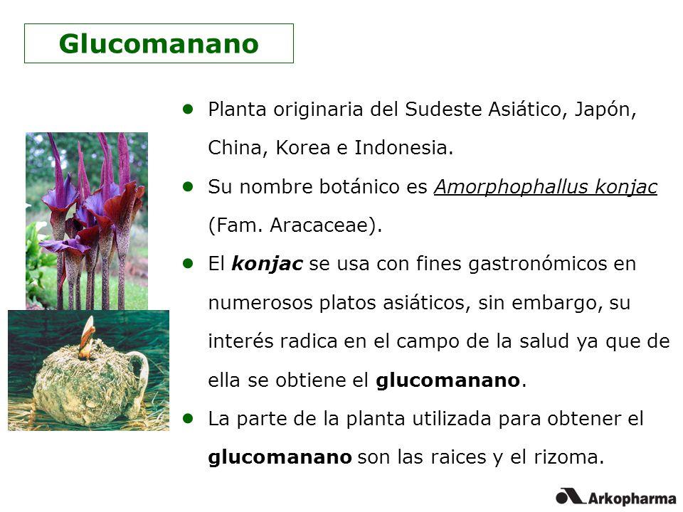 Planta originaria del Sudeste Asiático, Japón, China, Korea e Indonesia. Su nombre botánico es Amorphophallus konjac (Fam. Aracaceae). El konjac se us