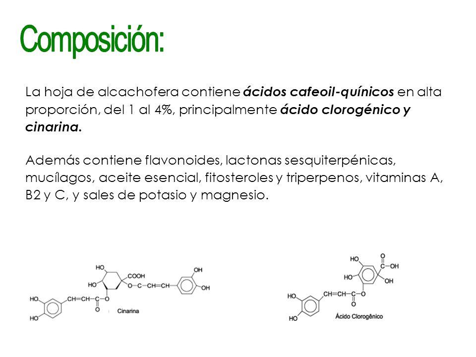 La hoja de alcachofera contiene ácidos cafeoil-quínicos en alta proporción, del 1 al 4%, principalmente ácido clorogénico y cinarina. Además contiene