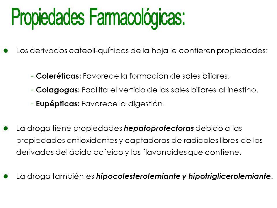 Los derivados cafeoil-quínicos de la hoja le confieren propiedades: - Coleréticas: Favorece la formación de sales biliares. - Colagogas: Facilita el v