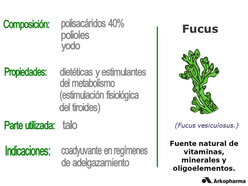 Fucus (Fucus vesiculosus.) Fuente natural de vitaminas, minerales y oligoelementos.