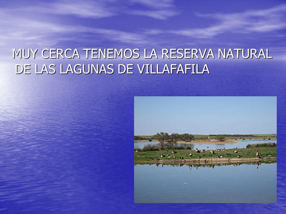 MUY CERCA TENEMOS LA RESERVA NATURAL DE LAS LAGUNAS DE VILLAFAFILA MUY CERCA TENEMOS LA RESERVA NATURAL DE LAS LAGUNAS DE VILLAFAFILA