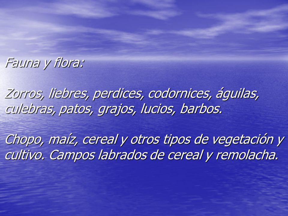 Fauna y flora: Zorros, liebres, perdices, codornices, águilas, culebras, patos, grajos, lucios, barbos. Chopo, maíz, cereal y otros tipos de vegetació