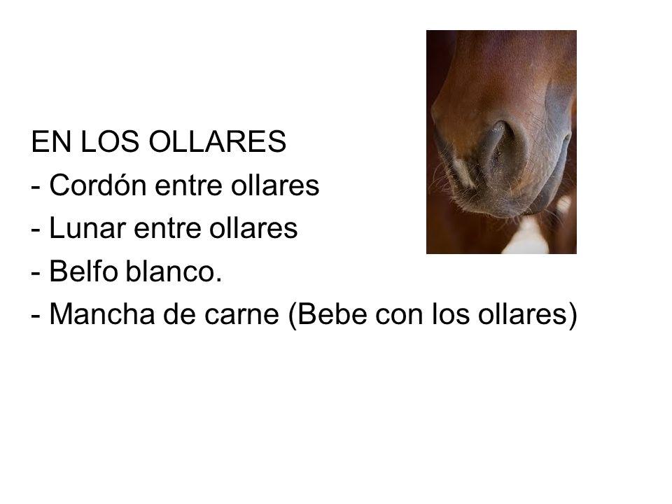 EN LOS OLLARES - Cordón entre ollares - Lunar entre ollares - Belfo blanco.