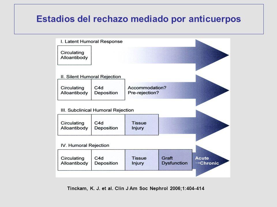 Tinckam, K. J. et al. Clin J Am Soc Nephrol 2006;1:404-414 Estadios del rechazo mediado por anticuerpos