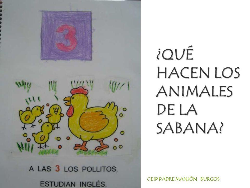 CEIP PADRE MANJÓN BURGOS ¿QUÉ HACEN LOS ANIMALES DE LA SABANA?