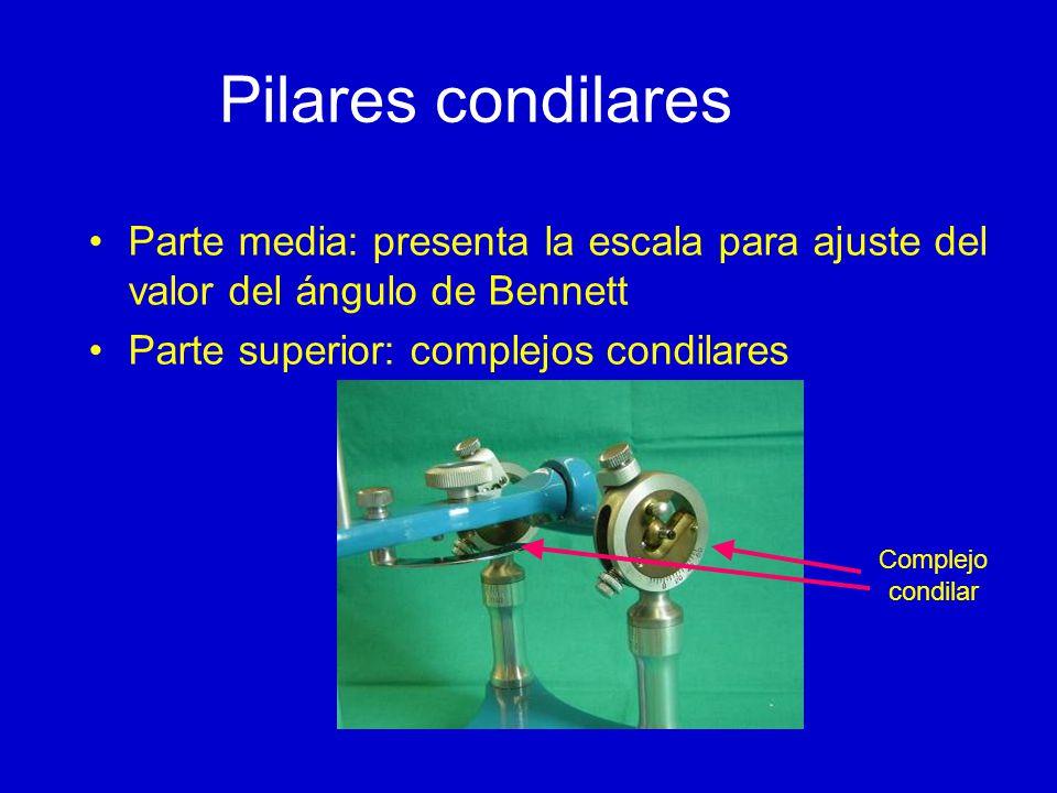 Pilares condilares Parte media: presenta la escala para ajuste del valor del ángulo de Bennett Parte superior: complejos condilares Complejo condilar