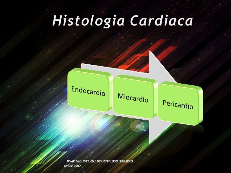 O / WWW. DMD. FVET. EDU. UY / HISTOLOGIA / EMBRIOLO GIACARDIACA