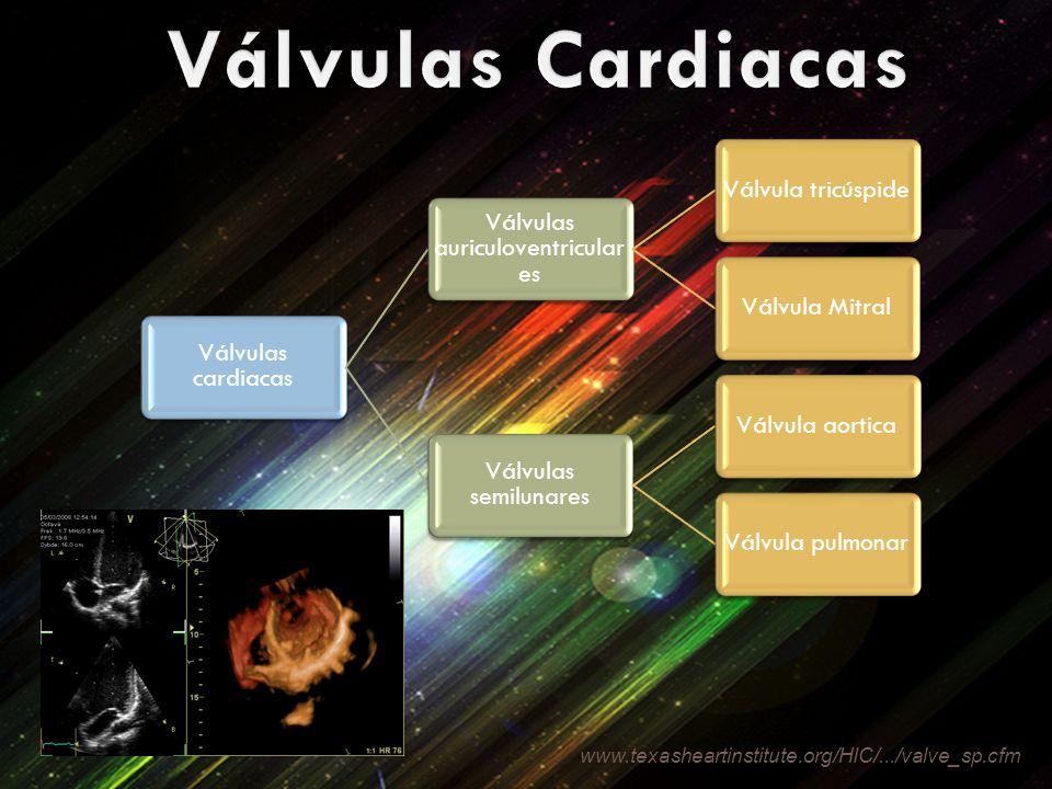Válvulas cardiacas Válvulas auriculoventricular es Válvula tricúspideVálvula Mitral Válvulas semilunares Válvula aorticaVálvula pulmonar www.texasheartinstitute.org/HIC/.../valve_sp.cfm