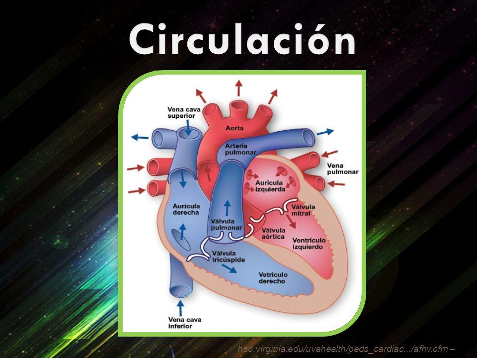 hsc.virginia.edu/uvahealth/peds_cardiac.../afhv.cfm –