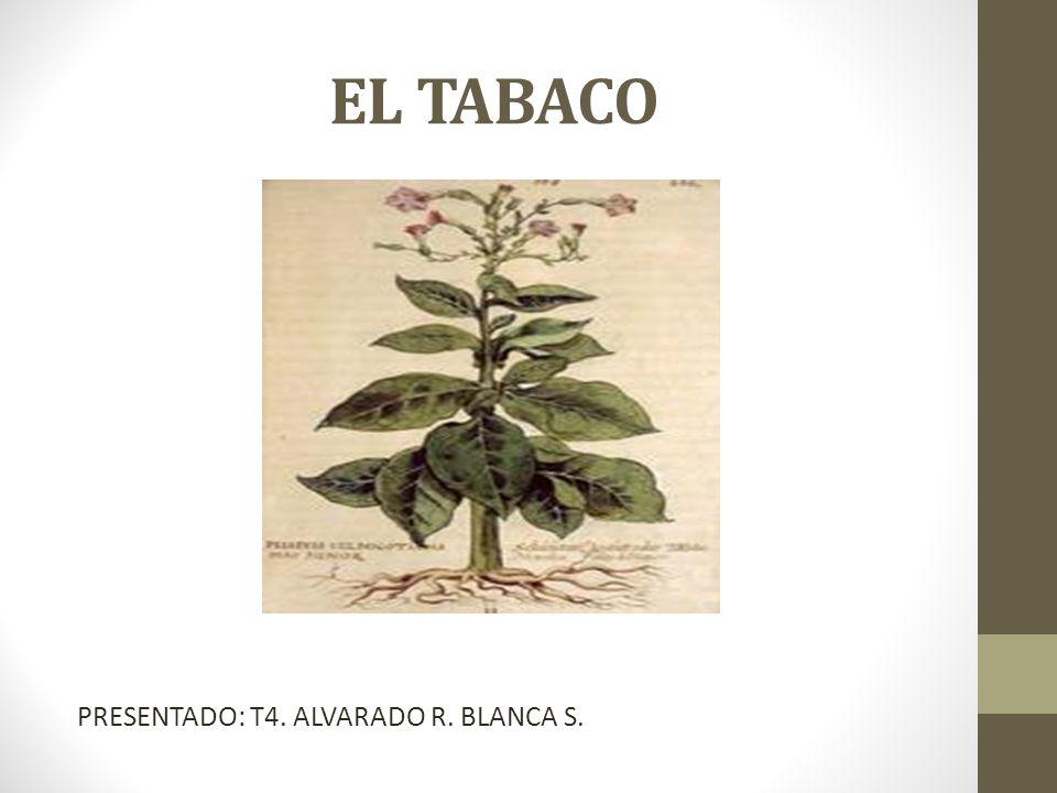 EL TABACO PRESENTADO: T4. ALVARADO R. BLANCA S.