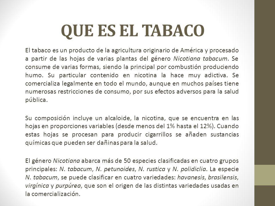 QUE ES EL TABACO El tabaco es un producto de la agricultura originario de América y procesado a partir de las hojas de varias plantas del género Nicot