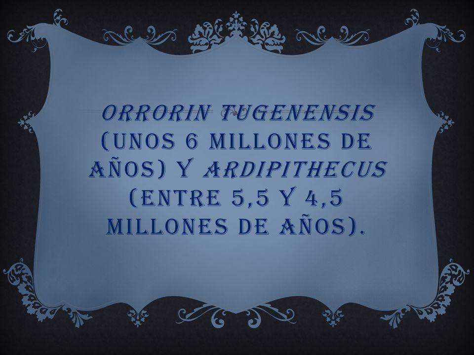 LOS PRIMEROS POSIBLES HOMÍNIDOS BÍPEDOS (HOMININOS) SON SAHELANTHROPUS TCHADIENSIS (CON UNA ANTIGÜEDAD DE 6 Ó 7 MILLONES DE AÑOS)
