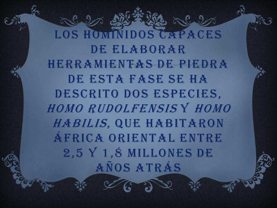 ESTE TIPO DE HOMININO PROSPERÓ EN LAS SABANAS ARBOLADAS DEL ESTE DE ÁFRICA ENTRE 4 Y 2,5 MILLONES DE AÑOS ATRÁS CON NOTABLE ÉXITO ECOLÓGICO