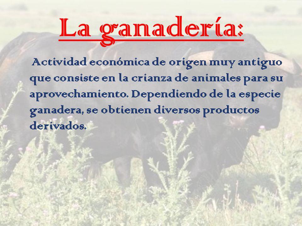 La ganadería: Actividad económica de origen muy antiguo que consiste en la crianza de animales para su aprovechamiento. Dependiendo de la especie gana