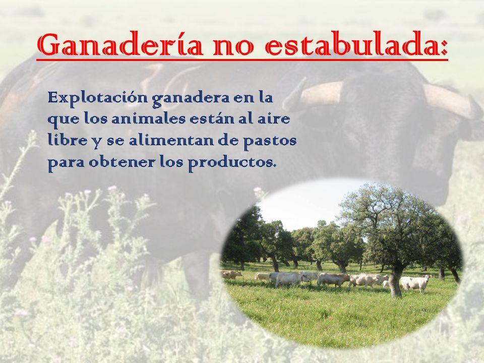 Ganadería no estabulada: Explotación ganadera en la que los animales están al aire libre y se alimentan de pastos para obtener los productos.