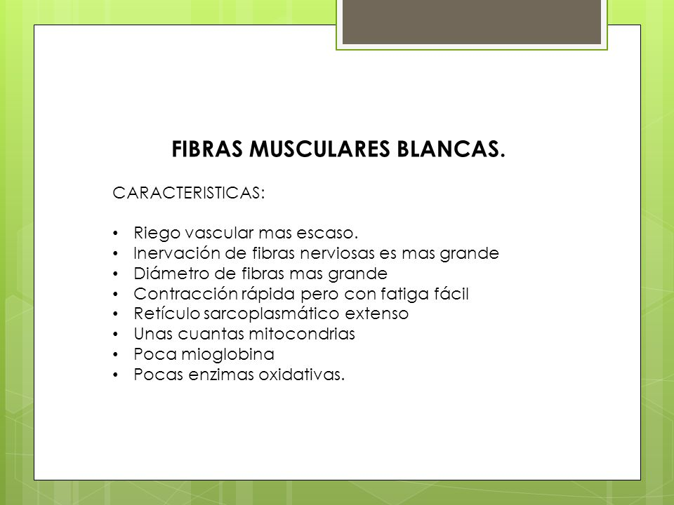 FIBRAS MUSCULARES BLANCAS. CARACTERISTICAS: Riego vascular mas escaso. Inervación de fibras nerviosas es mas grande Diámetro de fibras mas grande Cont