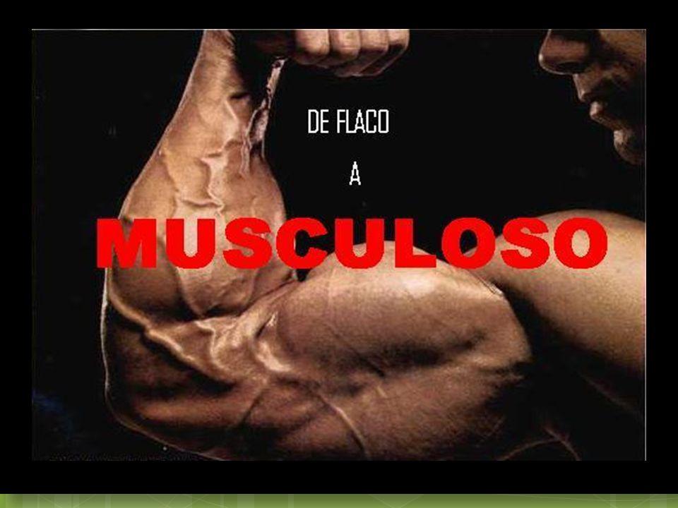 ¿Qué es un musculo.