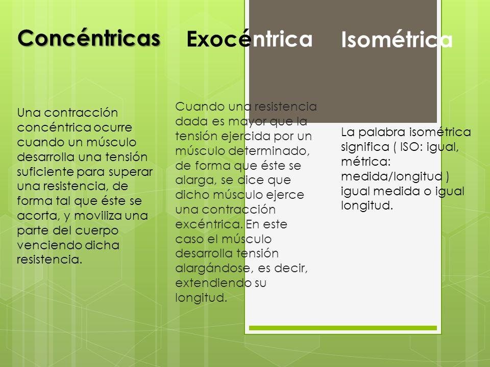 Concéntricas Isométrica Exocéntrica Una contracción concéntrica ocurre cuando un músculo desarrolla una tensión suficiente para superar una resistenci