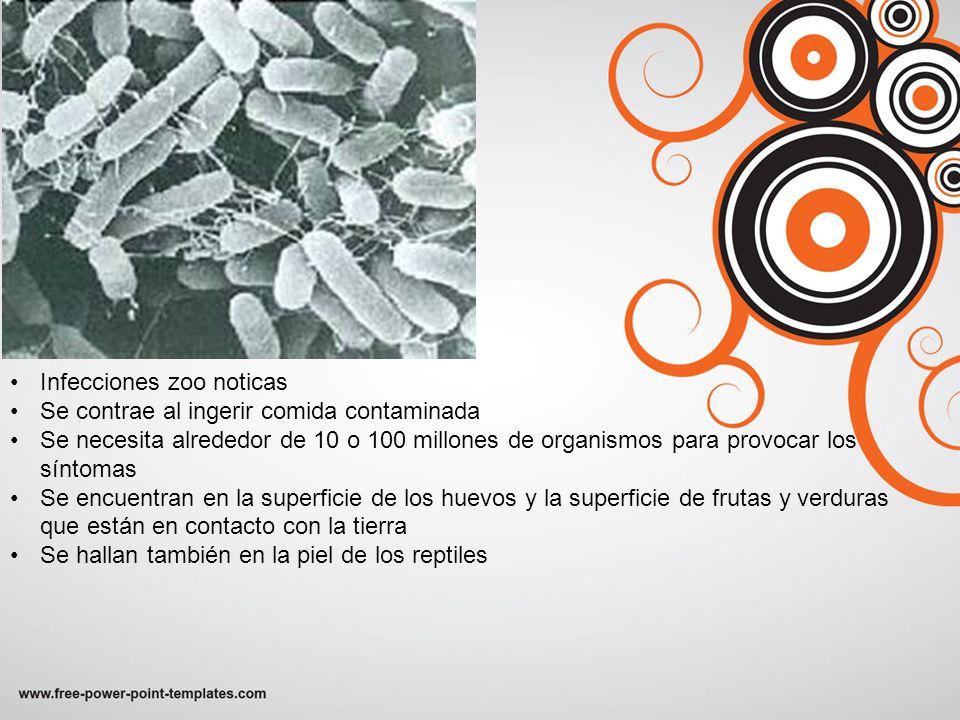 Infecciones zoo noticas Se contrae al ingerir comida contaminada Se necesita alrededor de 10 o 100 millones de organismos para provocar los síntomas S