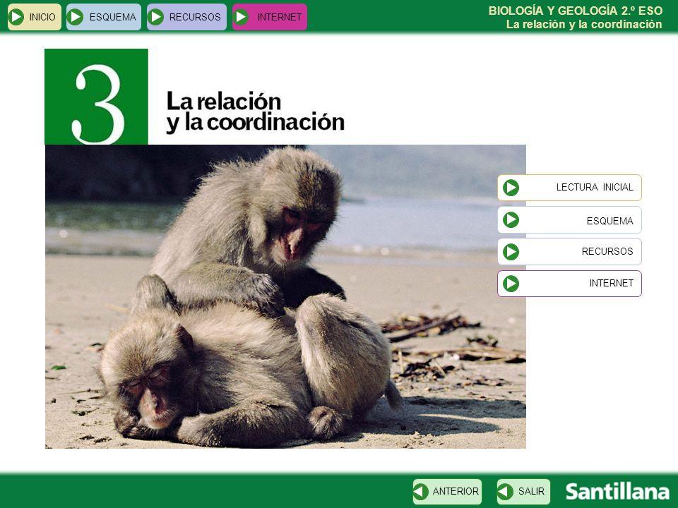 BIOLOGÍA Y GEOLOGÍA 2.º ESO La relación y la coordinación INICIOESQUEMARECURSOSINTERNET LECTURA INICIAL ESQUEMA RECURSOS INTERNETSALIRANTERIOR