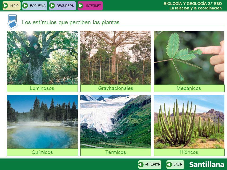 BIOLOGÍA Y GEOLOGÍA 2.º ESO La relación y la coordinación Los estímulos que perciben las plantas INICIOESQUEMARECURSOSINTERNET SALIRANTERIOR Luminosos